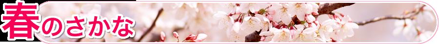 春のさかな