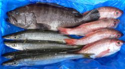 Direct shipment of fresh fish in a box