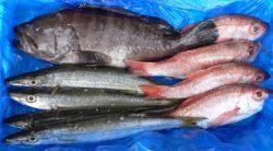 境港直送 鮮魚BOX