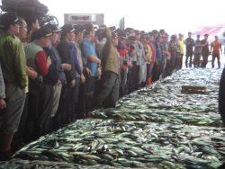 釜山協同魚市場2